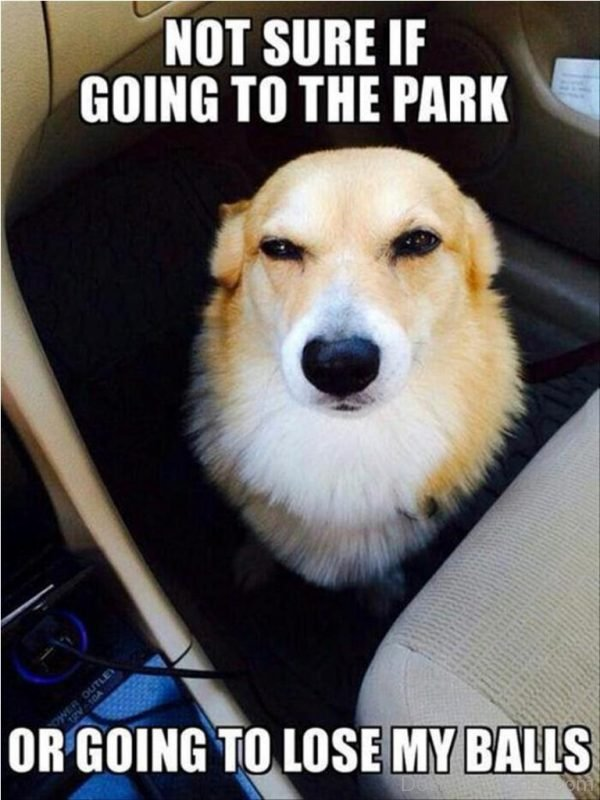 Not Sure If Going To The Park Or Going To Lose My Balls