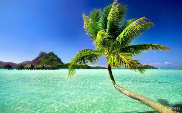 Palm Tree And Islands