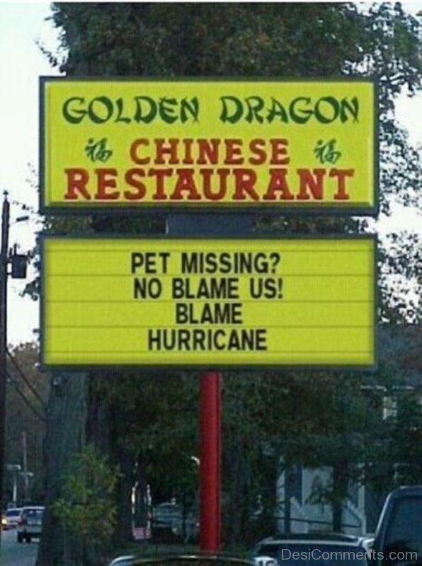 Pet Missing No Blame Us Blame Hurricane