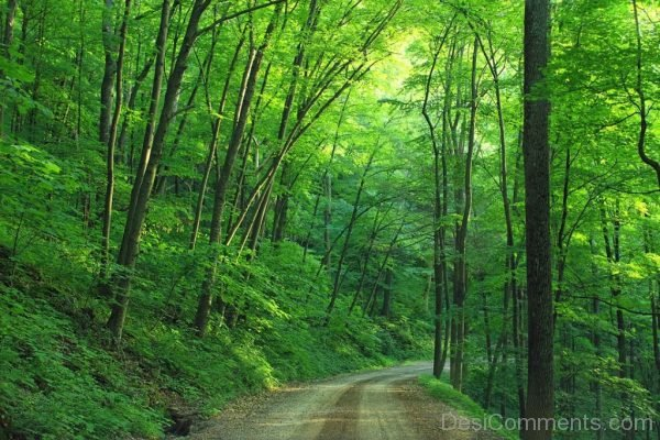 Road Loyalsock State Forest Image