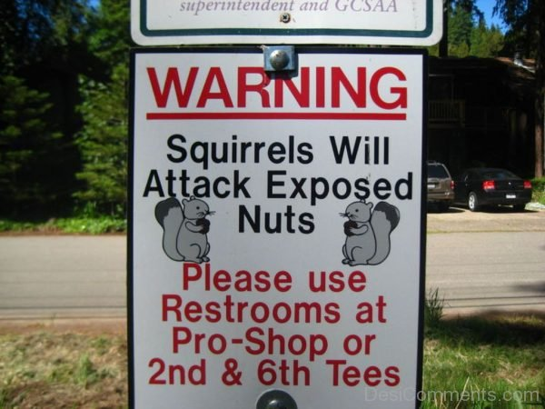 Squirrels Will Attack Exposed Nuts