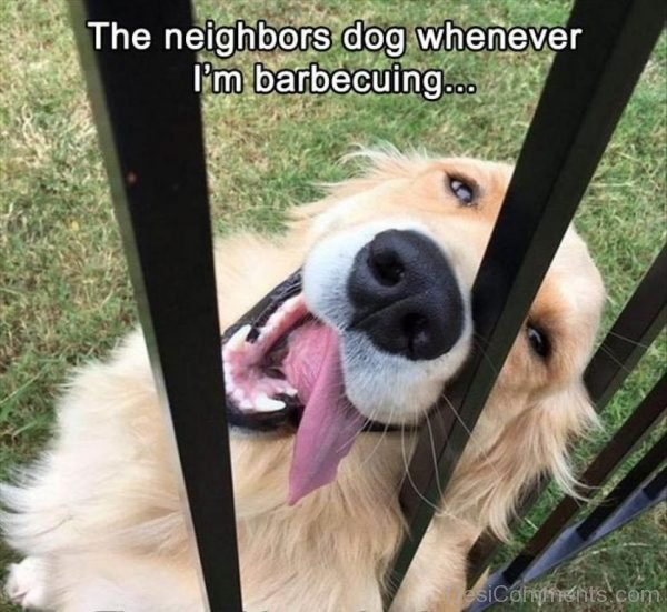 The Neighbors Dog Whenever I'm Barbecuing