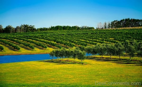 Uruguay Orchard Trees Canal Water Farm
