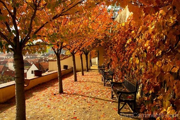 Awesome Image Of Autumn