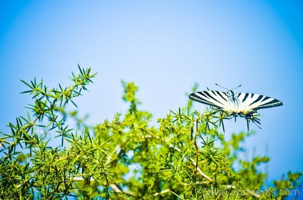 Awesome Pic Of Black And White Butterfly
