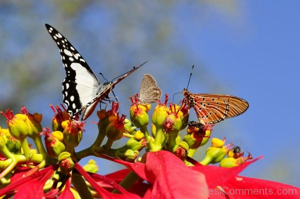 Beautiful Pic Of Black And White Butterfly