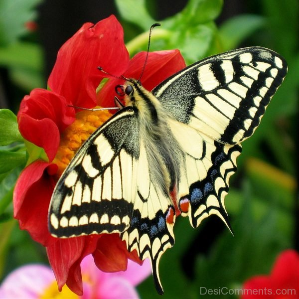 Beautiful Pic Of Butterfly