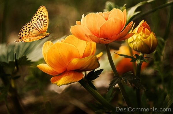Beautiful Yellow Butterfly Pic