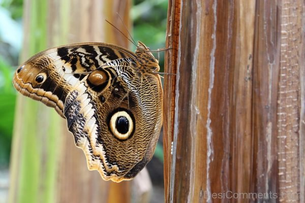 Brilliant Butterfly Image