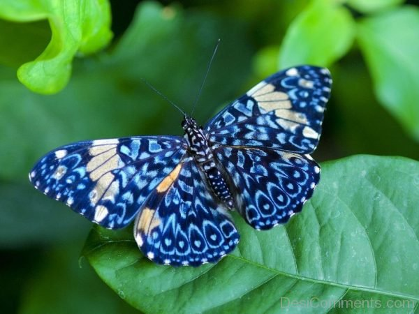 Brilliant Image Of Butterfly