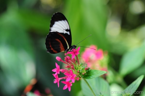Brilliant Picture Of Butterfly