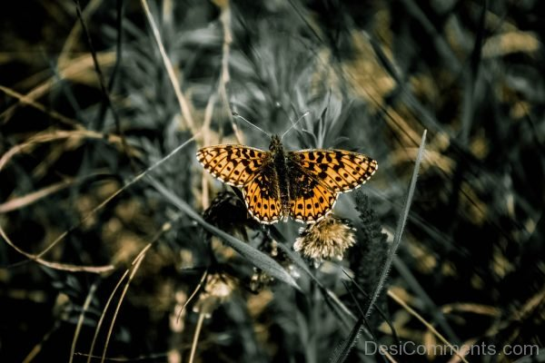 Attractive Picture Of Butterfly