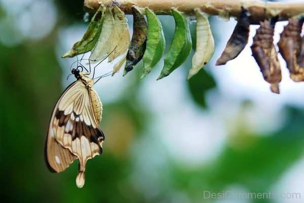 Brown And White Butterfly Pic
