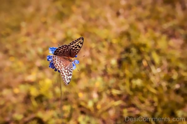 Butterfly Pcture