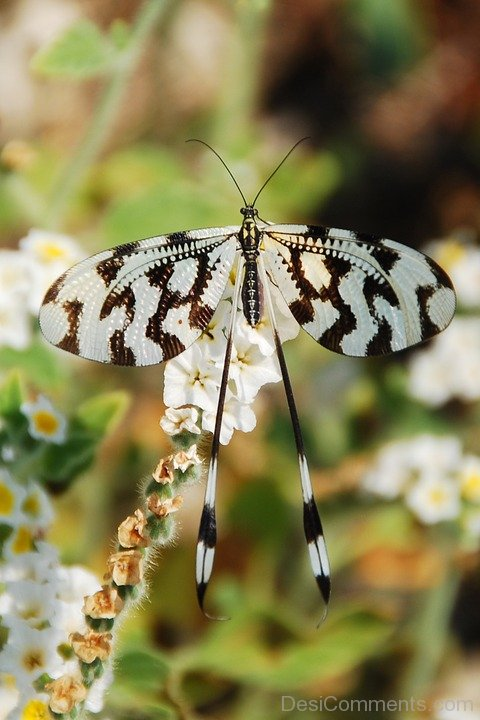 White And Black Wings Butterfly