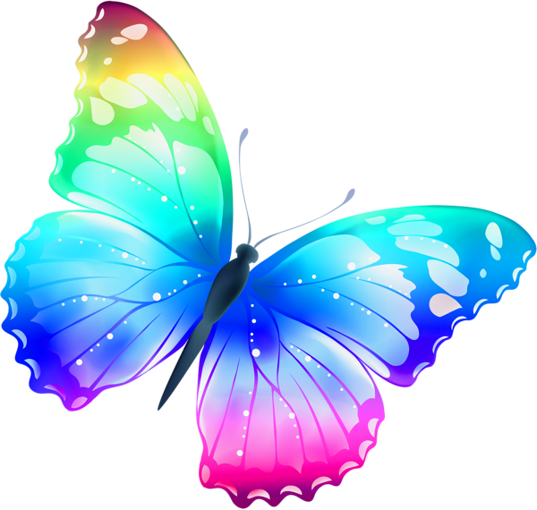 Colorful Butterfly Pic