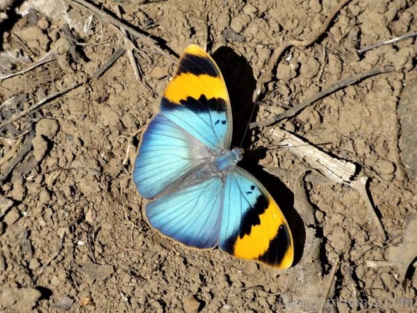 Excellent Image Of Butterfly
