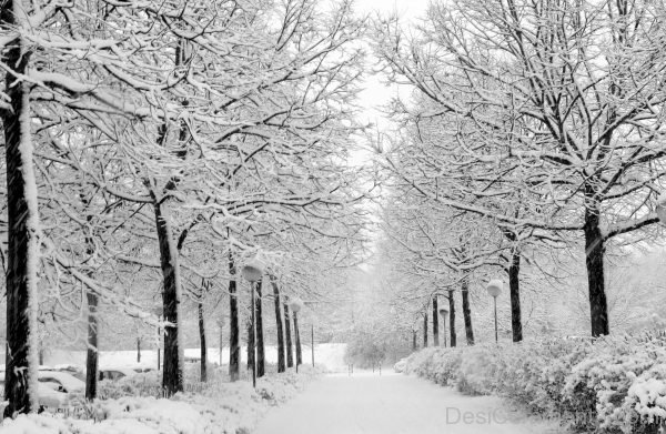Picture: Image Of Winter