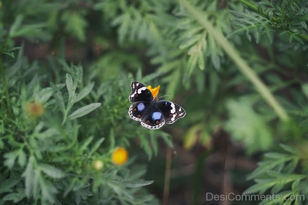 Lovely Butterfly Image