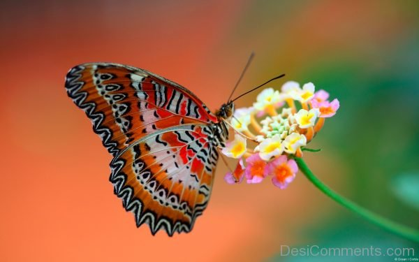 Lovely Image Of Butterfly