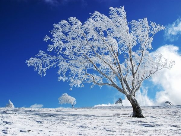 Lovely Photo Of Winter
