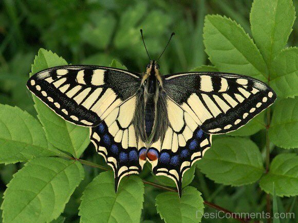 Lovely Pic Of Butterfly