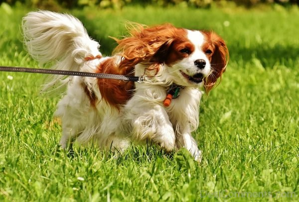 Lovely Pic Of Pet Dog