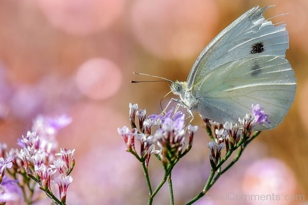 Lovely Picture Of White Butterfly