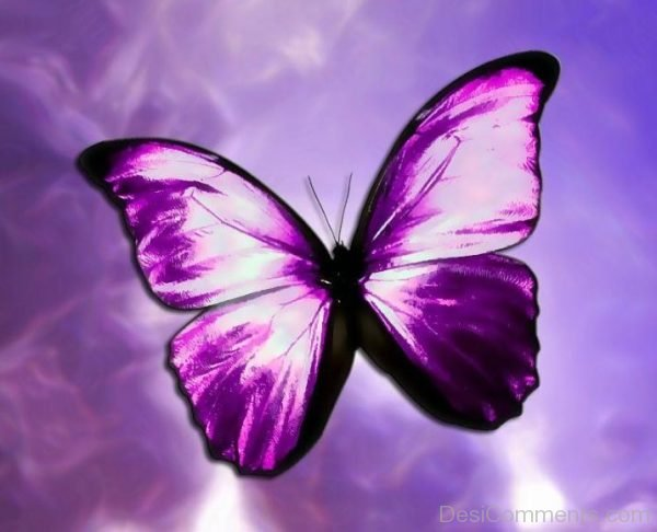 Lovely Purple Pic Of Butterfly
