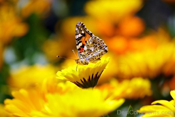 Nice Image Of Butterfly