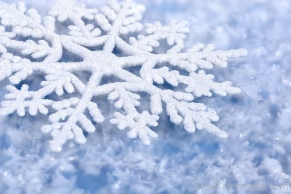 Picture: Nice Pic Of Winter