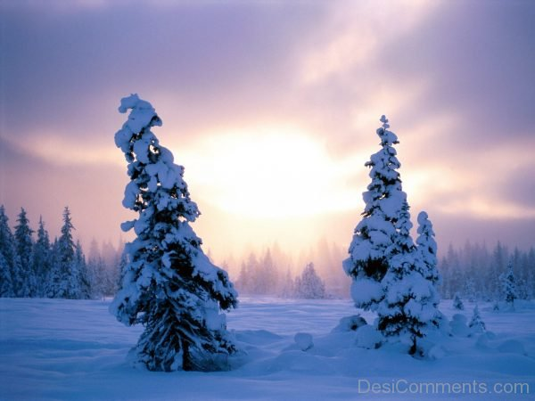 Nice Picture Of Winter