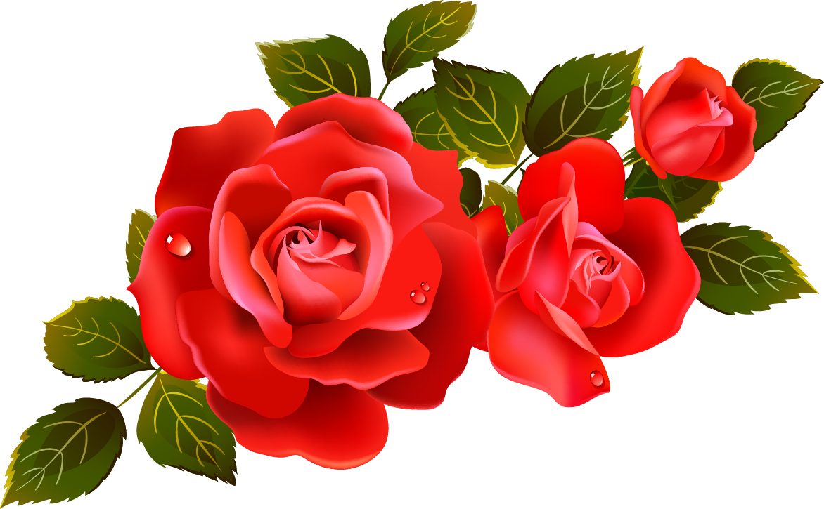 Rose Pictures, Images, Graphics