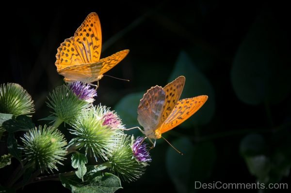 Two Butterflies Picture
