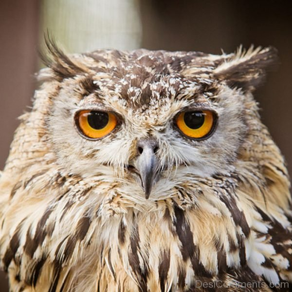Pic Of Owl