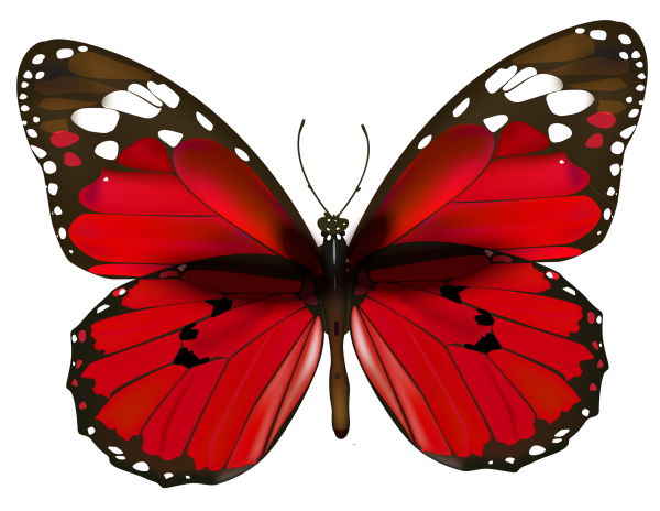 Red Butterfly Image