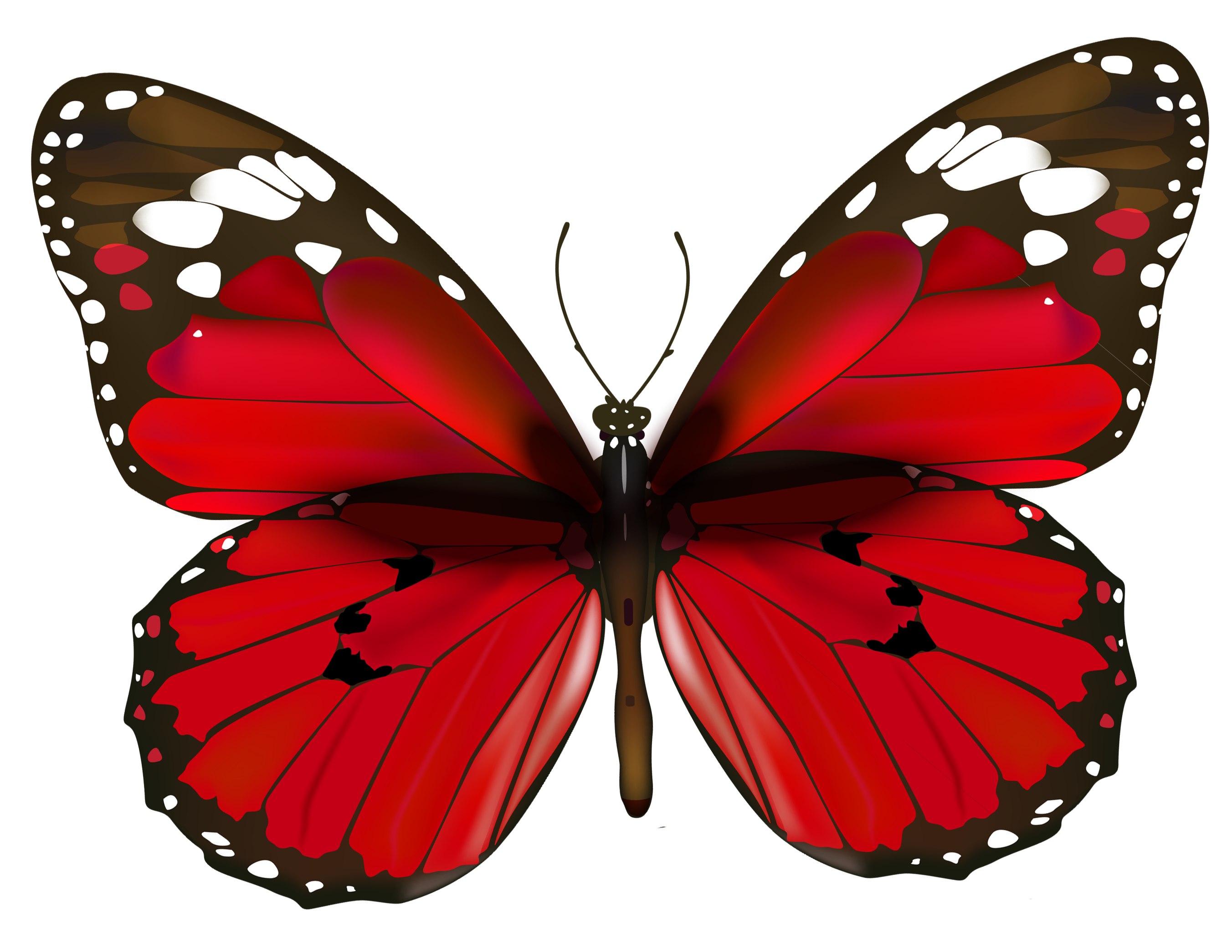 Wing Gold >> Butterfly Pictures, Images, Graphics - Page 3