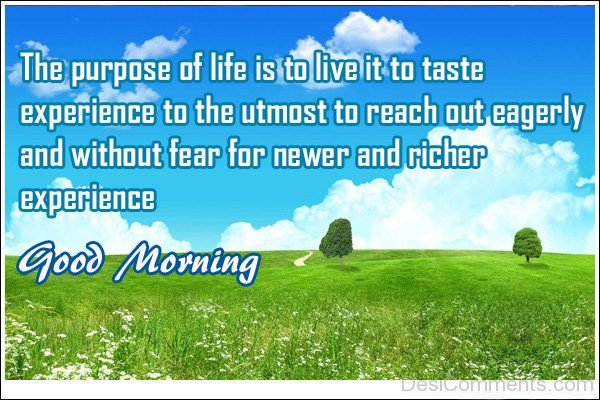 The Purpose Of Life Is To Live It To Taste Experience