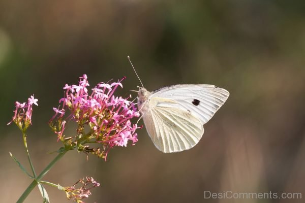 White Butterfly Image