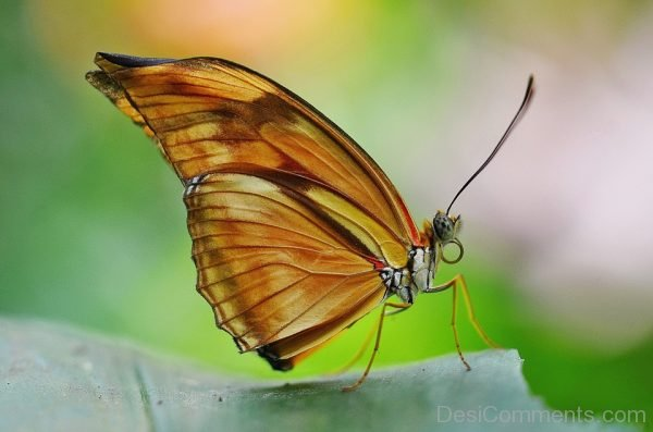 Wonderful Butterfly Pic