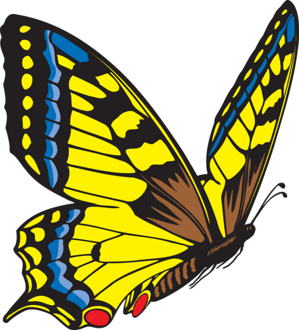 Wonderful Image Of Yellow Butterfly