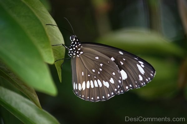 Wonderful Photo Of Butterfly