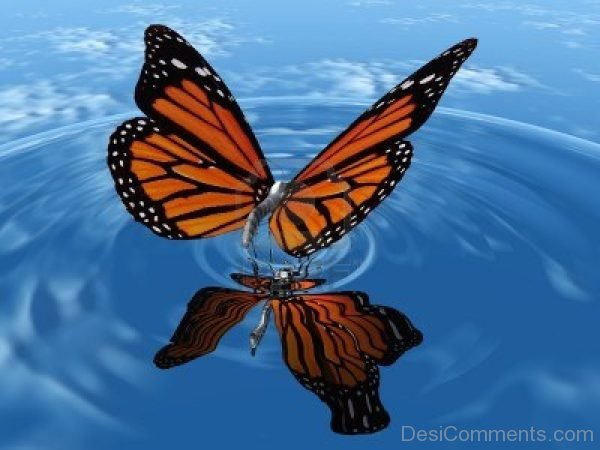 Wonderful Pic Of Butterfly