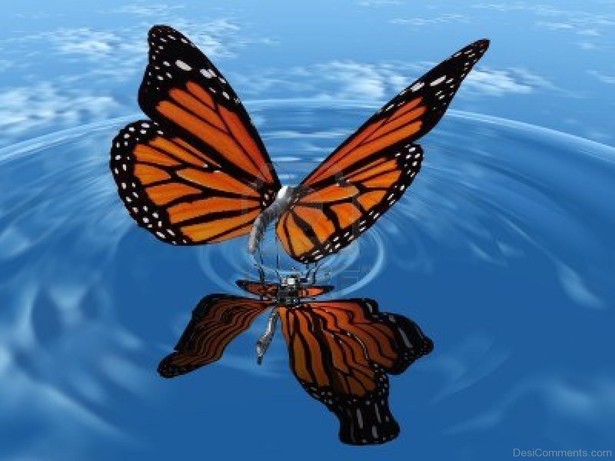 Butterfly Gallery: Butterfly Pictures, Images, Graphics