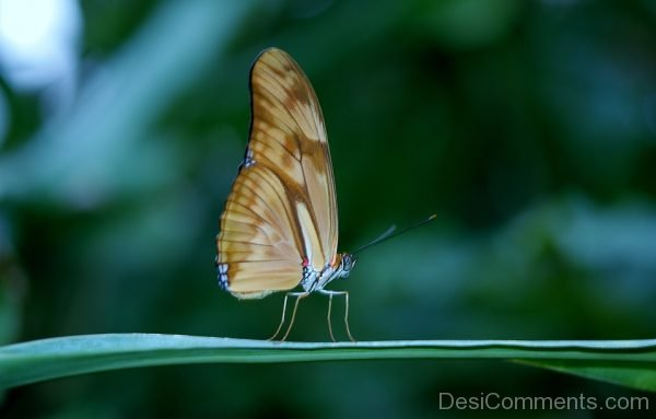 Wonderful Picture Of Butterfly