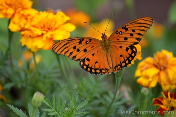 Yellow And Black Butterfly Image