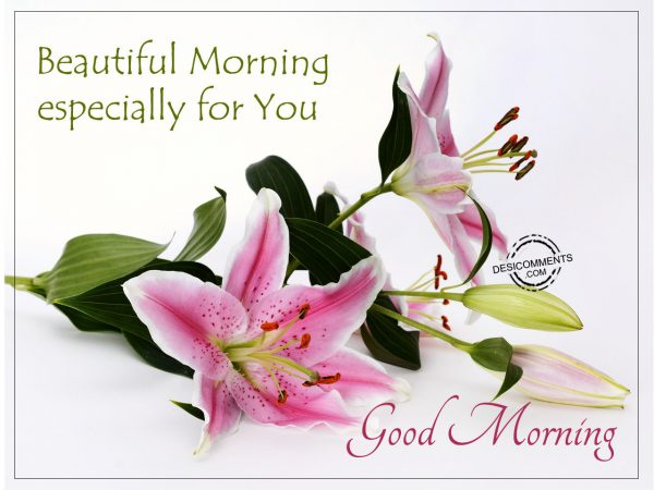 Beautiful Morning Especially For You