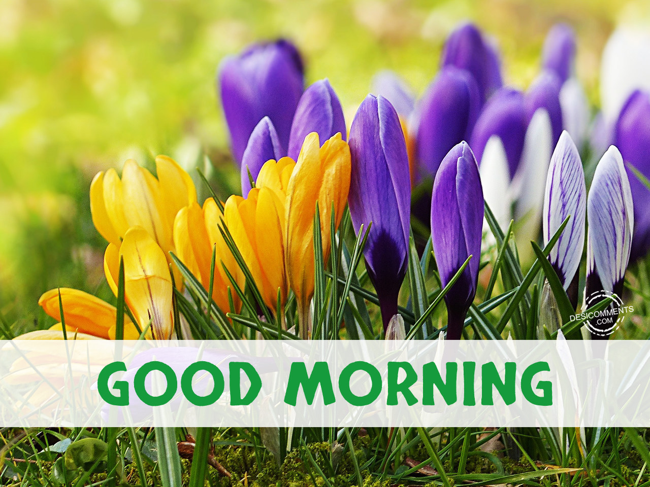 Good Morning Pictures, Images, Graphics for Facebook ...