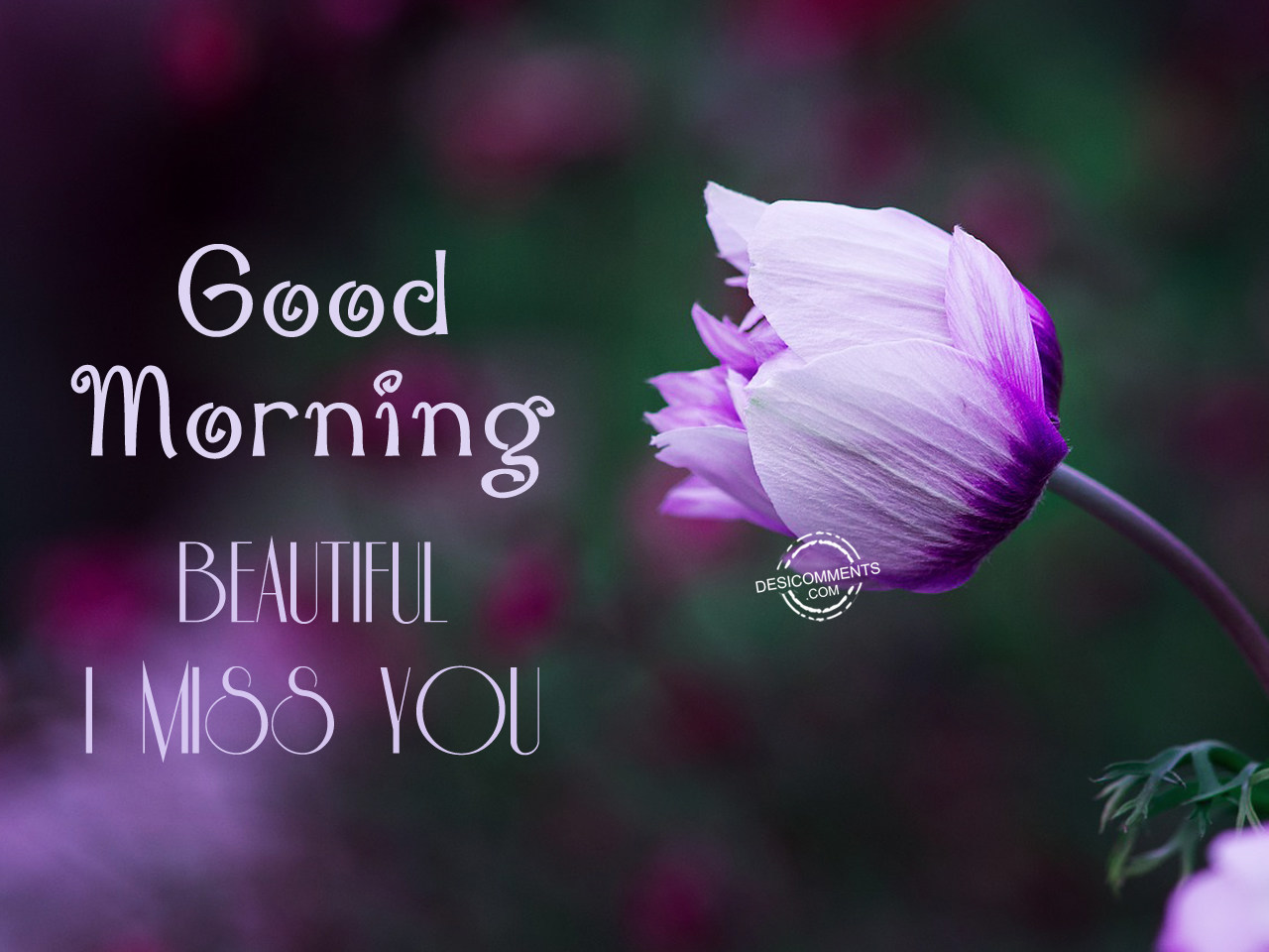 Good Morning Beautiful Pictures : Good morning beautiful driverlayer search engine