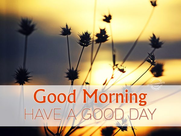 Good Morning Have A Good Day.
